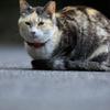 猫と同じ目線で写してみました