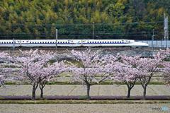 桜と新幹線①
