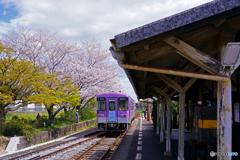 北条線と桜②