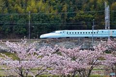 桜と新幹線②
