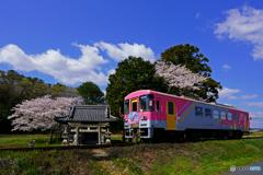 北条線と桜③