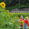 ひまわり畑と列車②