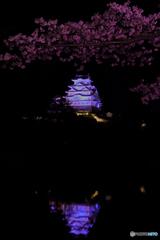 姫路城と桜③