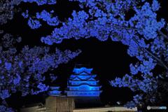 姫路城と桜②