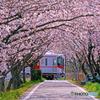 山陽電車と桜