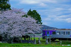 北条線と桜①
