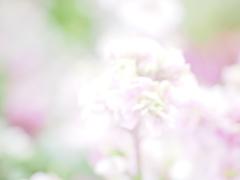 春はもうすぐだよ〜