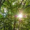 木漏れ日浴びて深呼吸