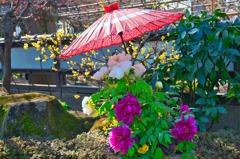 上野東照宮-冬牡丹庭園2