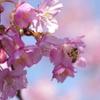 ミツバチ君こんにちは!