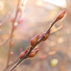 春を待つ #2