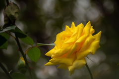 Autumn garden 24