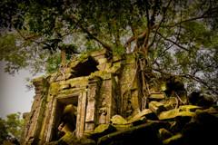Beng Mealea 11 君臨する樹木 #2