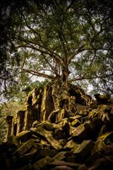 Beng Mealea 06 君臨する樹木