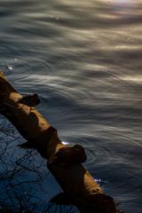 運河_点描 03 陽だまり
