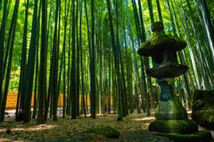 鎌倉漫ろ歩き 25 竹林の寺