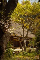 里山の春 #1 古木と古民家