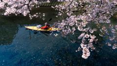遡上する 春 #2