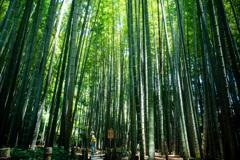 鎌倉漫ろ歩き 24 竹林にさす光