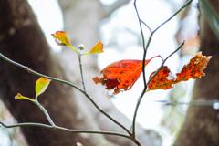 Leaf 15 秋色に染まる #1
