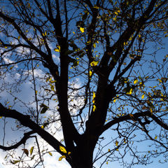 黄色 葉-葉-葉
