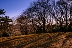 春をまつ丘 03