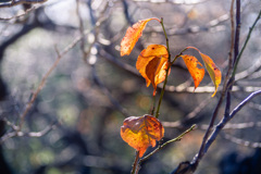 Leaf 18 秋色に染まる