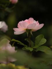 Autumn garden #5 スカボロ・フェアー