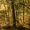 雑木林の中の秋