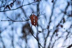 冬の記憶 01 孤愁