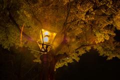 Gaslightの灯る街 21