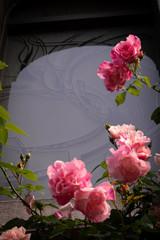 ゲーテ座跡に咲く薔薇 07