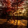 秋の日は釣瓶落とし #1
