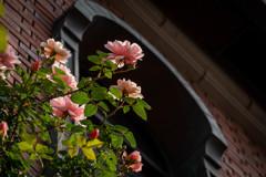 ゲーテ座跡に咲く薔薇 03