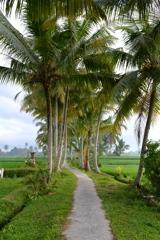 Bali Ubud_03 バリの畦道