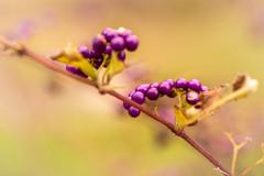 高貴の色 紫式部