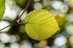 Leaf #18