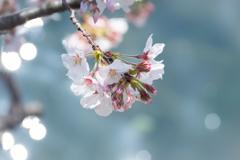 陽ざし温む  春