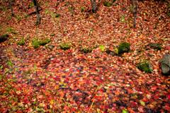 Red Leaves Carpet