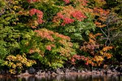 屈斜路湖 紅葉が始まるとき