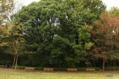 四季の森公園3