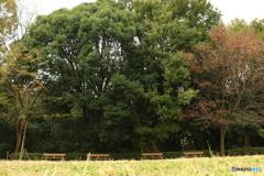 四季の森公園4