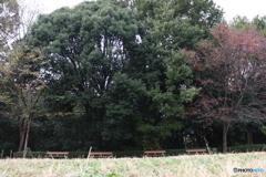四季の森公園5