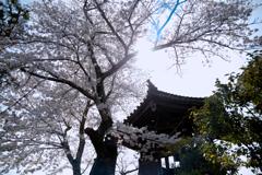 飛鳥寺01