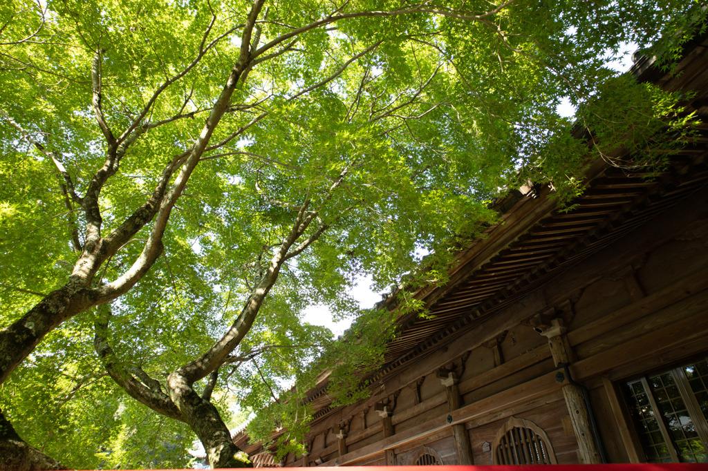 真福寺(愛知県岡崎市)