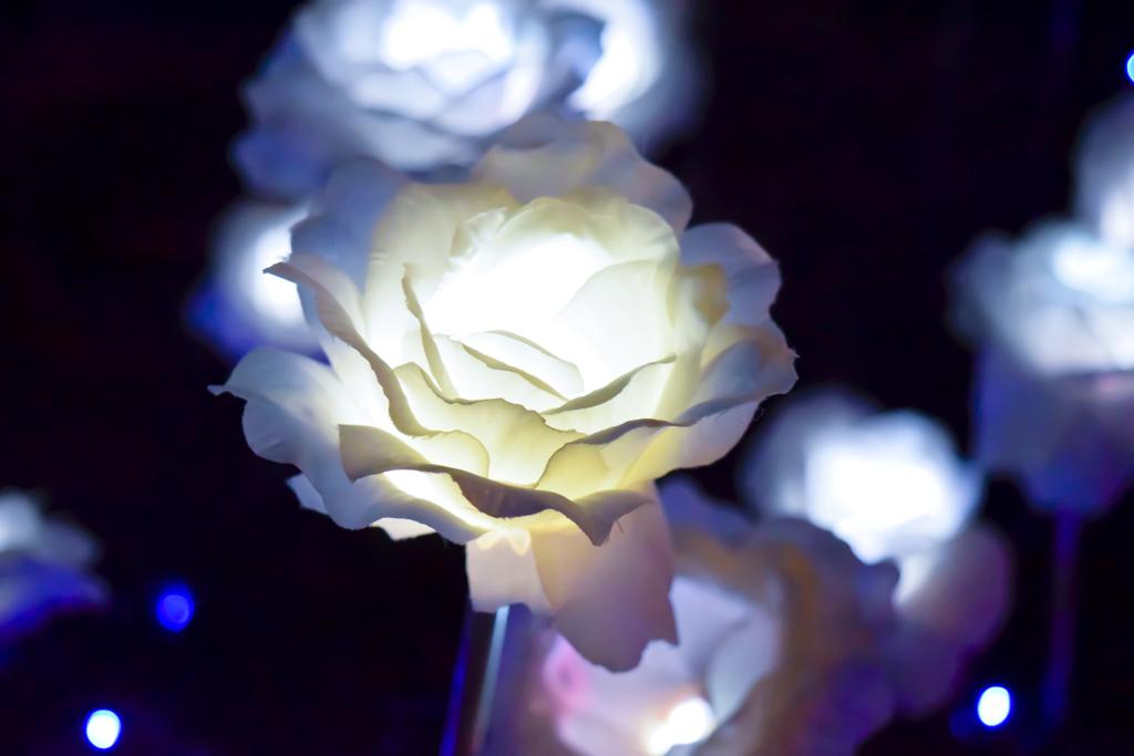 ライトアップされた花