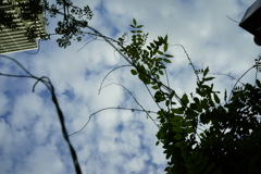 sky / plant