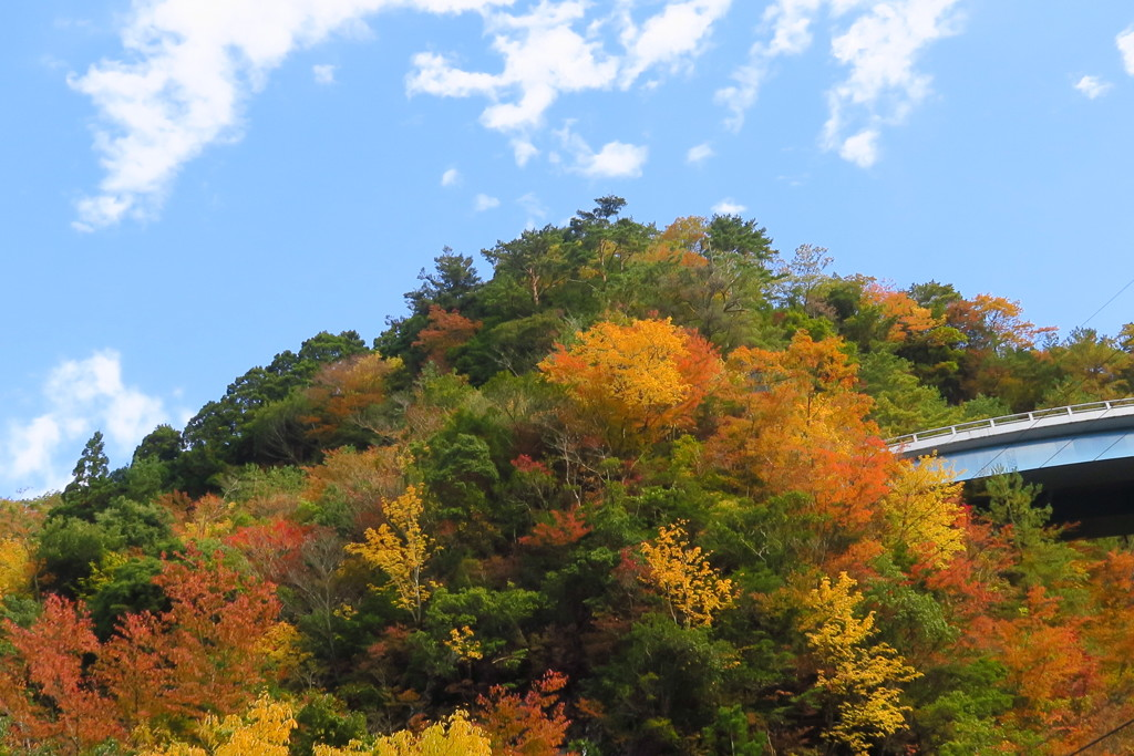 紅葉と青い空