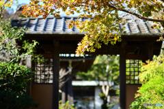 鎌倉 海蔵寺3