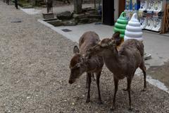 20180406_17奈良公園